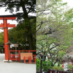 What is the difference between Japanese shrine and temple?
