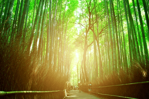 Bamboo is sacred in Japan